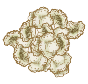 Små blomkålsbuketter