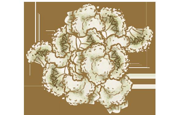 blomkålsbuketter